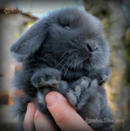 Regalo coniglio nano ariete cucciolo 9mesi cerca compra for Cerco motorino usato in regalo