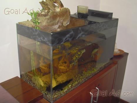 Plafoniere Per Acquari Aperti : Plafoniera acquario vendo aperto cerca