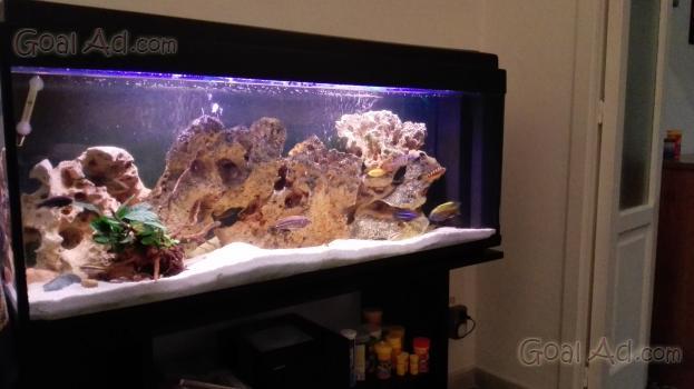 Atomizzatore gruppo diserbo portato litri completo cerca for Cerco acquario per tartarughe usato