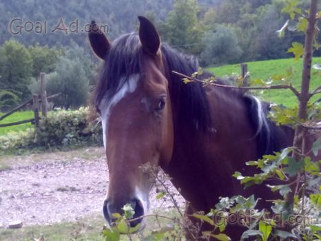 Cavallo paint vendo stallone domato sella cerca compra vendi