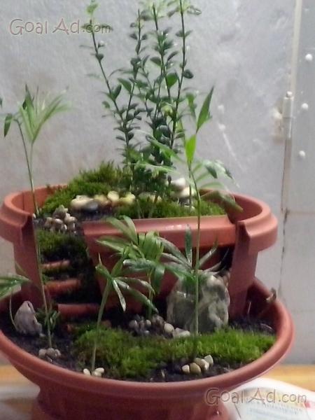 Mini giardini produco proprio vaso terrazzi cerca for Fenicottero decorativo giardino