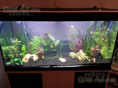 Acquario askoll tenerif stilus 120x40 t5ho cerca compra for Acquario per tartarughe usato