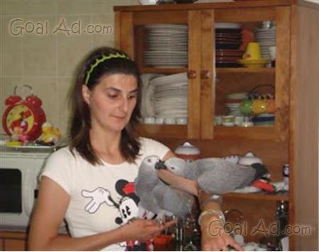 Cerco regalo pappagallo pappagalli donare famiglia cerca for Cerco motorino usato in regalo