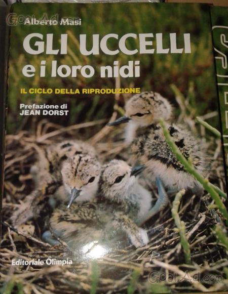 26 x 46 x 12,5 cm Colorato Relaxdays 10023162 Casette per Uccelli su Base in Legno da Esterno Decorazione da Giardino HxLxP