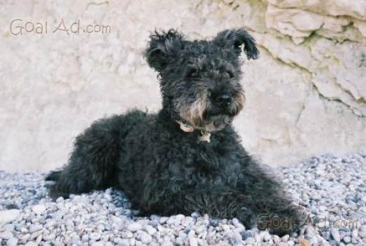 Cane pastore caucaso cerco cucciolo cerca compra vendi nuovo e usato caucaso attenti al - Cerco piastrelle a poco prezzo ...